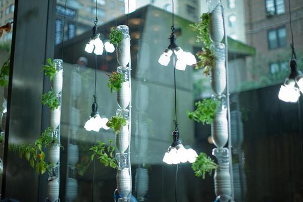 Garden Apartment How To Grow Your Own Veggies Year Round