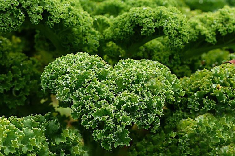 kale-healthy-foods-good-skin