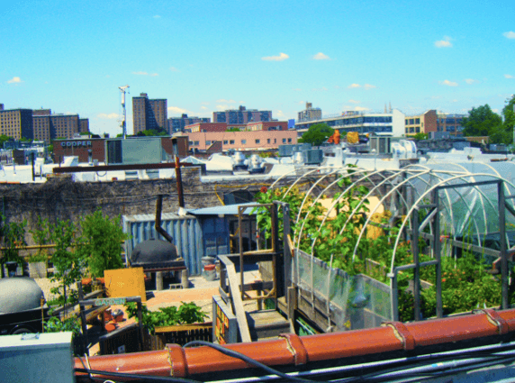 8 New York City restaurants that grow their own food