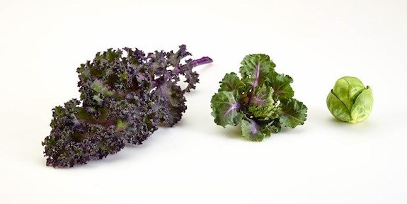 kalettes-kale-brussels-sprouts
