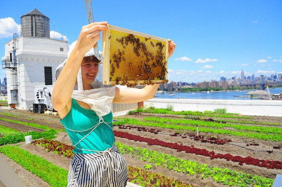New York City beekeeping