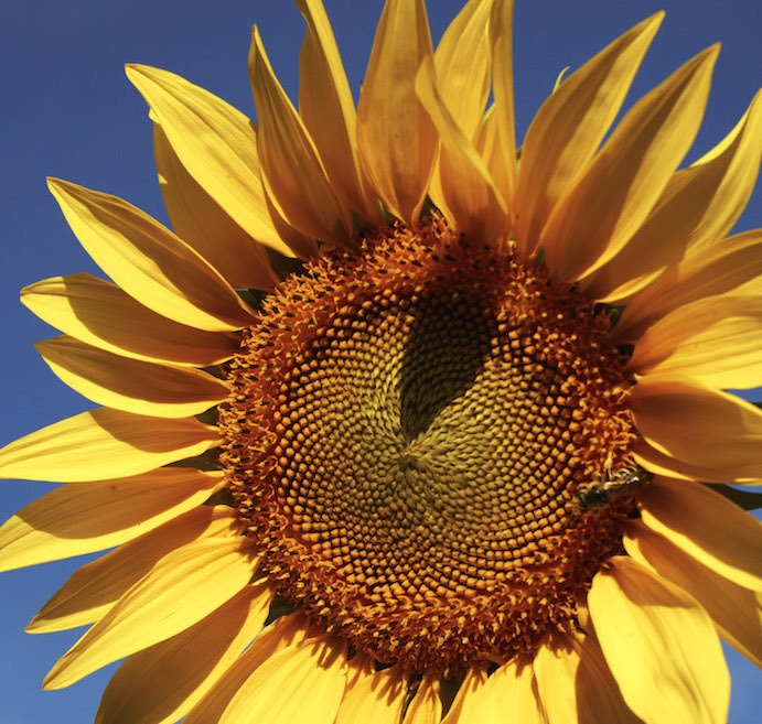 113_Get 15 Minutes of Sunshine a Day-Frank Lipman