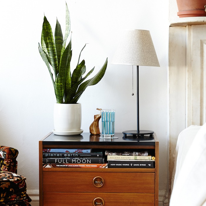 Best Way To Look For Apartments: The Best Indoor Plants From The Sill