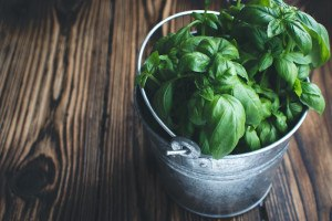 5 expert tips for growing herbs in your tiny apartment