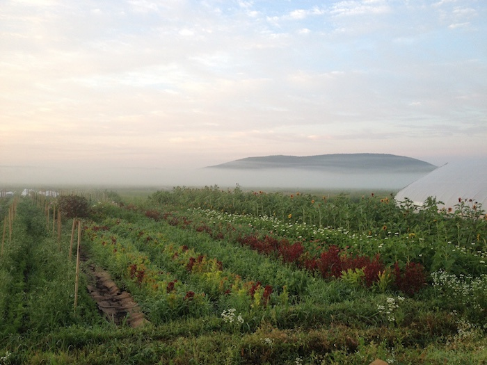 Rise & Root Farm Misty Morning