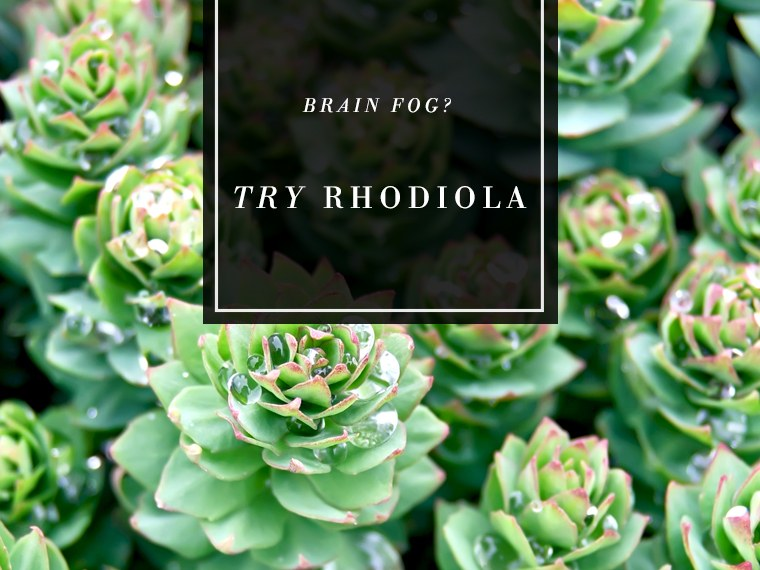 Superherb-Rhodiola