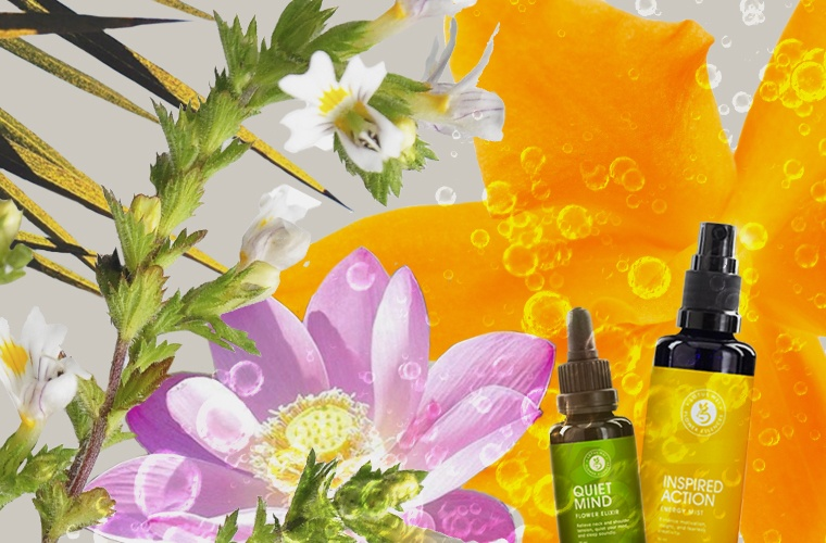 Thumbnail for The Plus Factor: And why there are flower essences in our logo