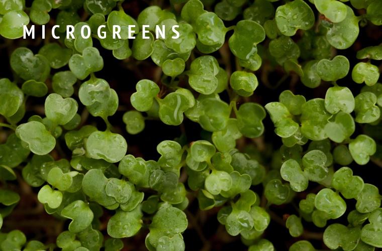 Micro-Greens-Guide