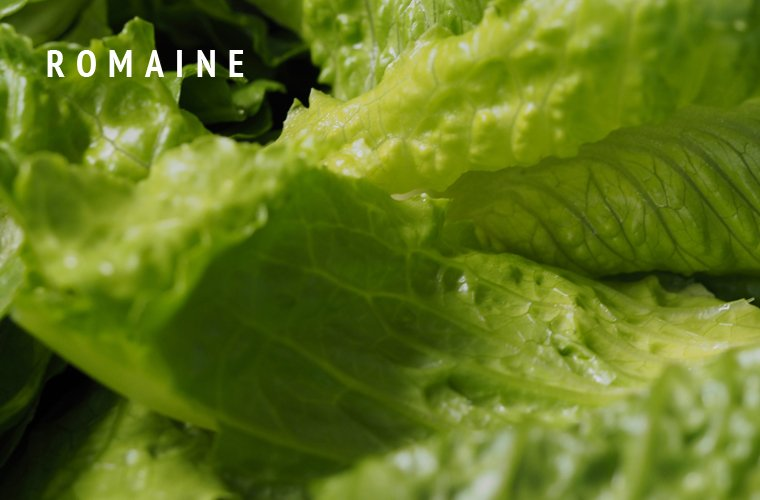 Romaine-Greens-Guide