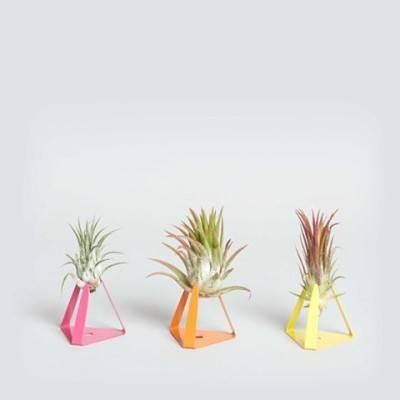 Workday inspo: Now picturing our desks with these sweet little air plants and their colorful stands from @thesill. #plantobsessed #iamwellandgood