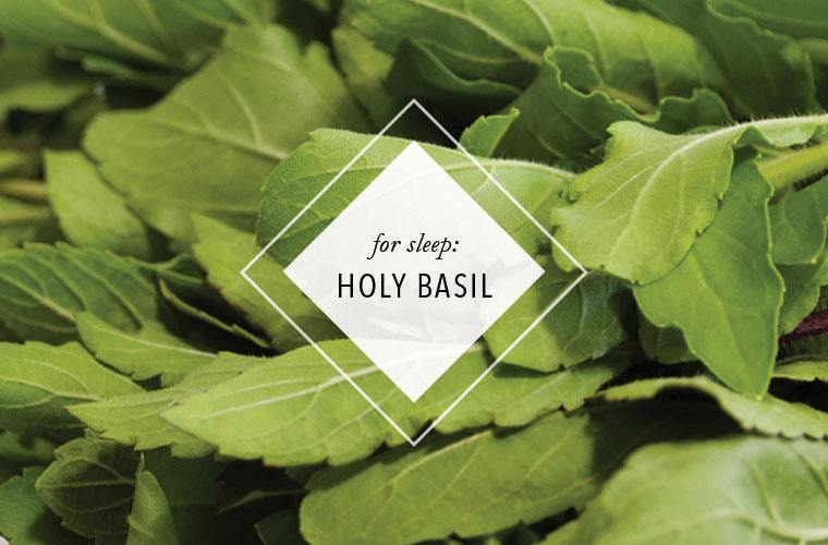 holy-basil