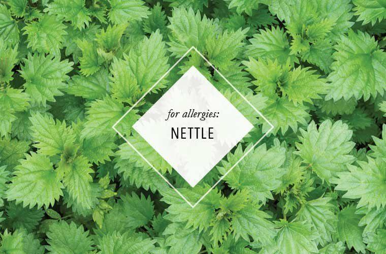 nettleleaf