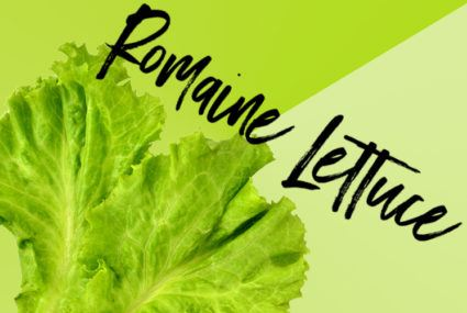 Why romaine lettuce is making a comeback