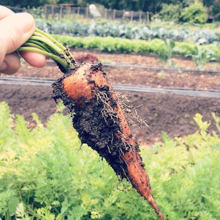 lauren-conrad-carrot-retreat