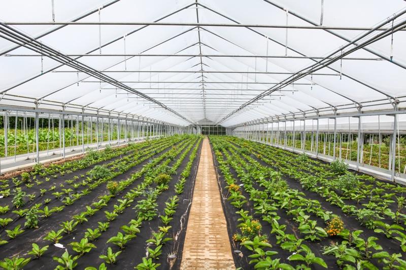 weleda-greenhouse
