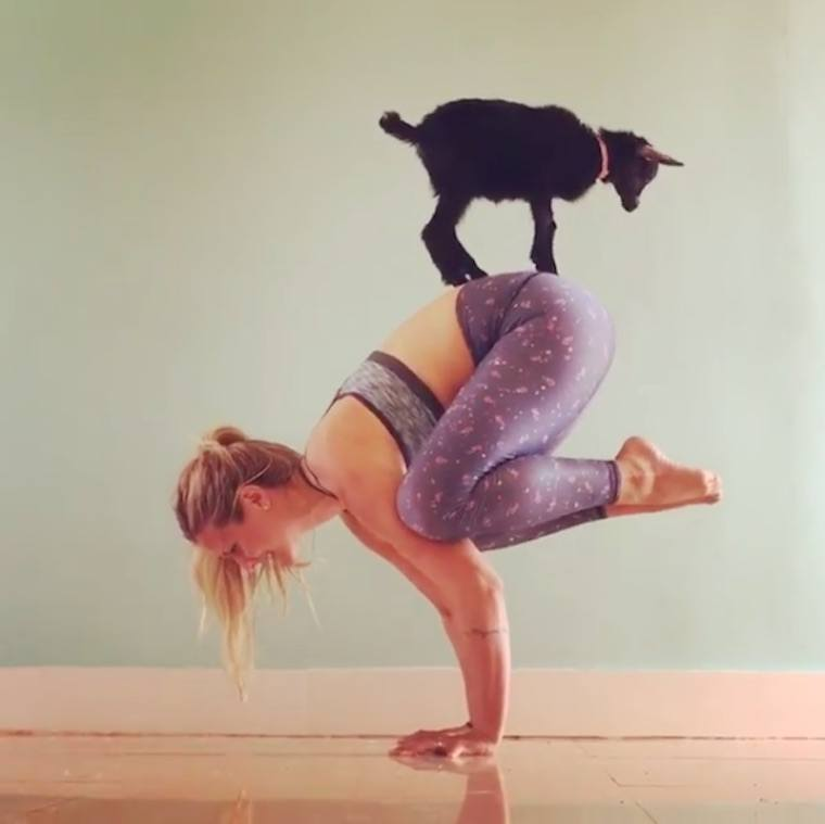 Why Goat Yoga Is The New Dog Yoga Well Good