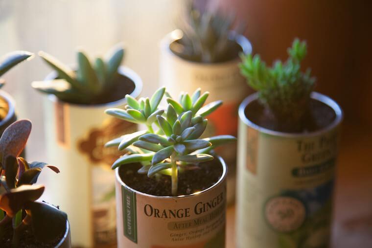 Summer Rayne Oakes urban jungle plants