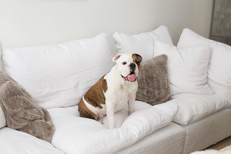 Chelsea Foss pet bulldog Penny