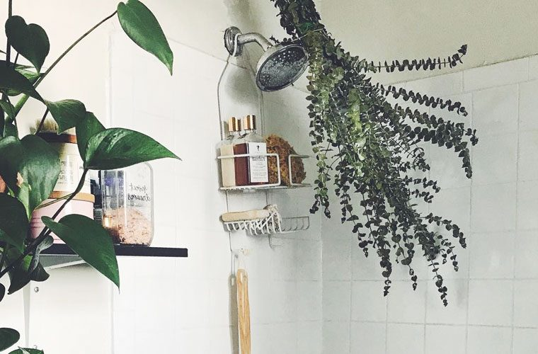 How To Grow Plants In Your Bathroom Well Good