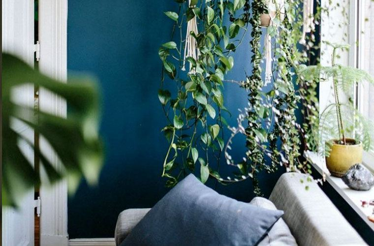 How to create an Instagram-worthy shower plant installation