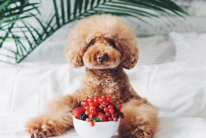 Meet the healthy it-dogs of Instagram