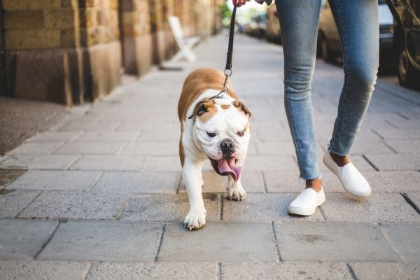 Why having a dog is definitely good for your health