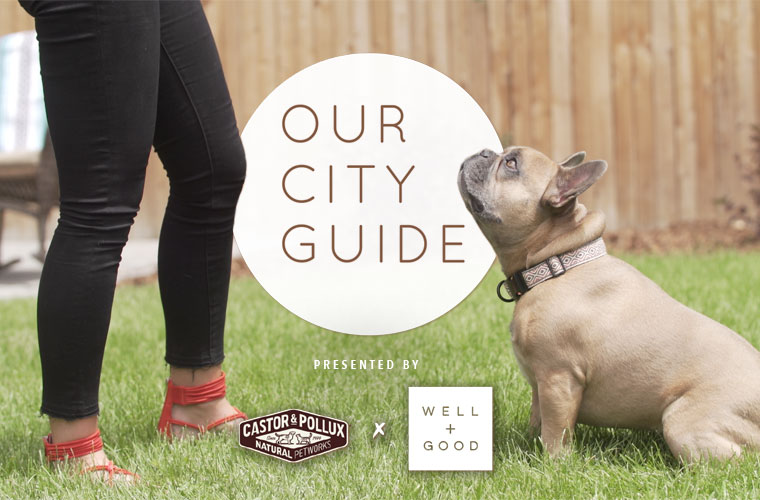 Why You Need to Add Denver to Your Dog-Friendly Wellness Vacay List