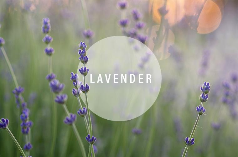 lavender essential oil sleep