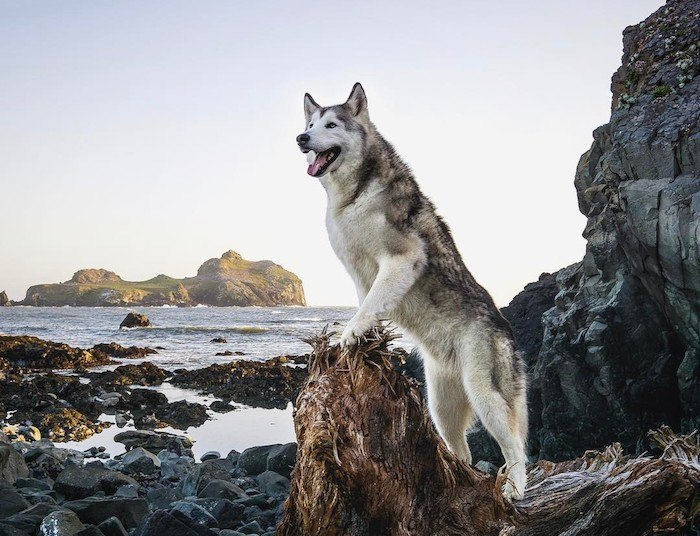 Healthiest dogs on Instagram
