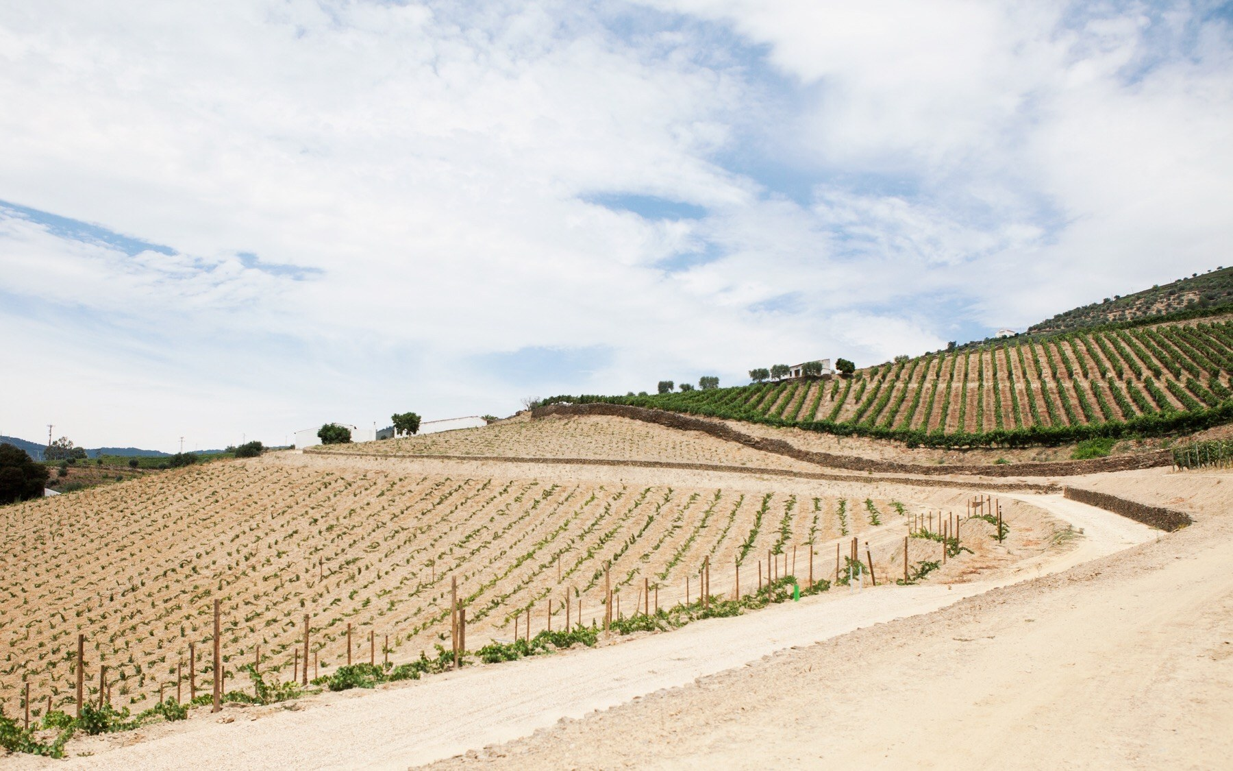 road-trip-abroad-vineyards-larkin-clark