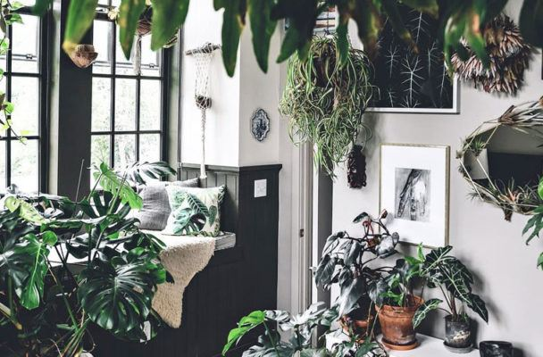 8 Instagram accounts that want to give your Zen den a jungle makeover