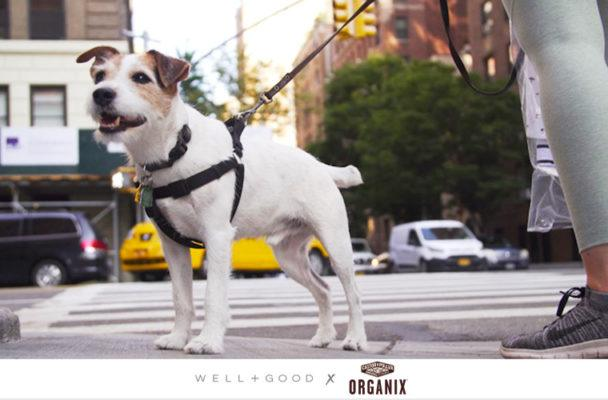 Where in-the-know New Yorkers (and their pets) stay healthy in the city