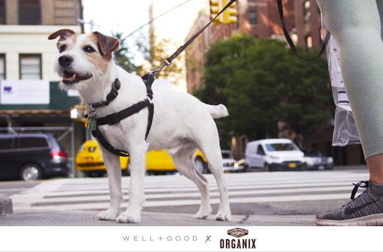 Thumbnail for Where in-the-know New Yorkers (and their pets) stay healthy in the city