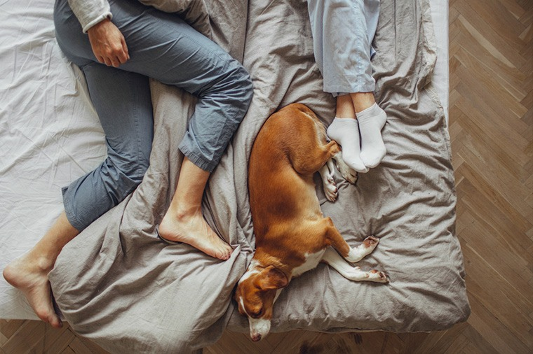Thumbnail for Is sleeping next to your dog the reason you're always tired?