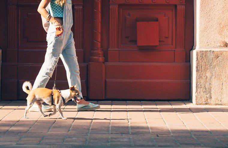 Thumbnail for The scientific reason you love taking your dog on walks