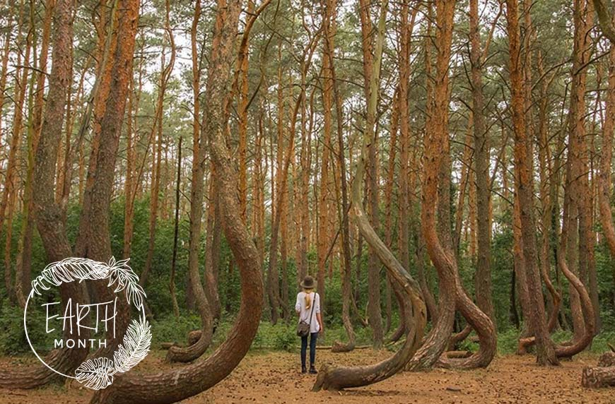 9 OTHERWORLDLY FOREST BATHING DESTINATIONS