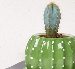 9 tiny desk planters that promote a mood-boosting work ...