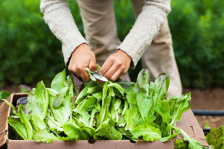 The health benefits of leafy greens | Well+Good