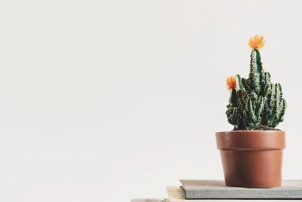 5 hard-to-kill indoor plants to get your urban jungle started