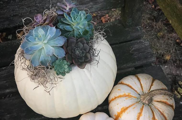 Thumbnail for 8 Ways to Decorate Your Pumpkin That Don't Involve Carving