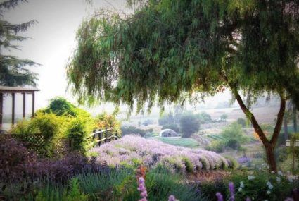 Dreamy travel alert: You can book a stay at these actual lavender farms