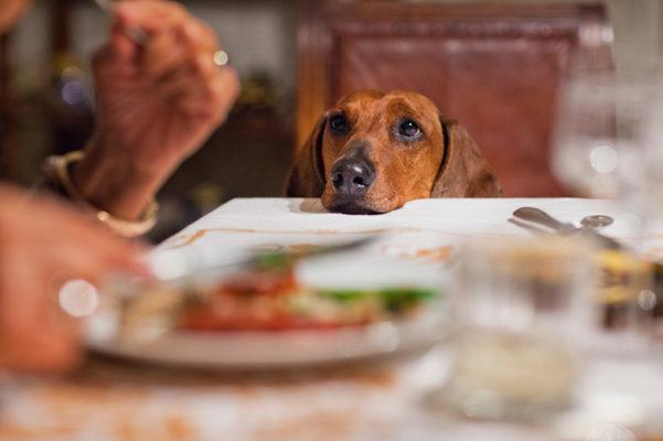 Here's what you *shouldn't* feed your dog on Thanksgiving