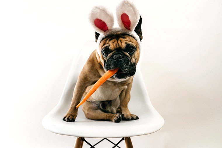 Thumbnail for These 9 costumed dogs took Halloween wellness #goals to a new level