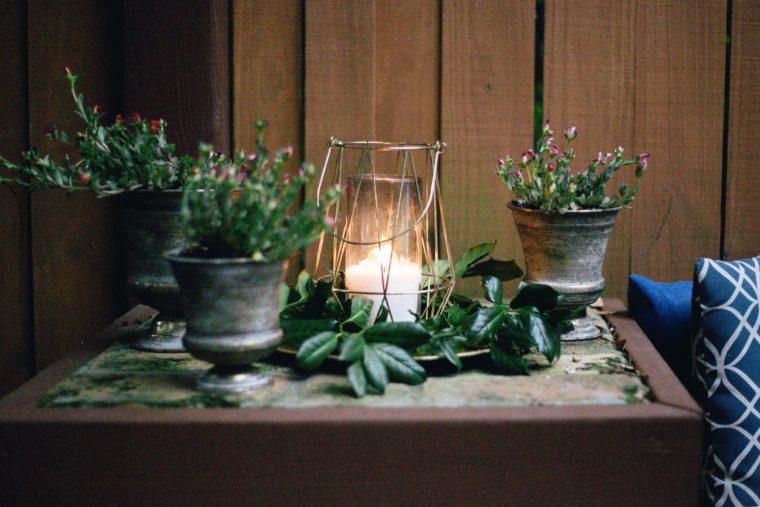 Meditation plants