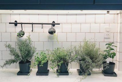9 creative Instagrams to inspire your own cool kitchen herb garden