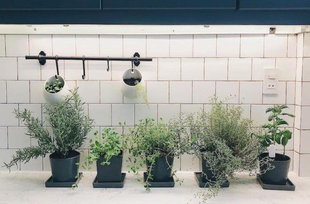 Thumbnail for 9 creative Instagrams to inspire your own cool kitchen herb garden
