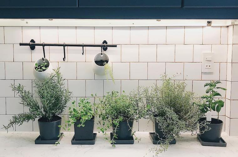 Indoor herb gardens on Instagram