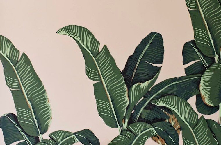 Thumbnail for 13 wallpapers that will turn your home into a tropical jungle oasis