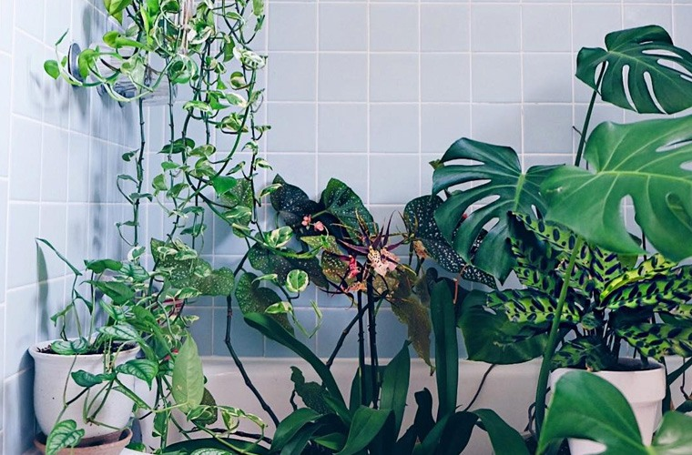 Thumbnail for Shower plants will literally make your bathroom feel like a lush tropical garden