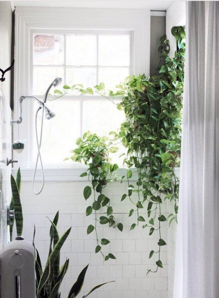 Shower plants create tropical spa experience | Well+Good